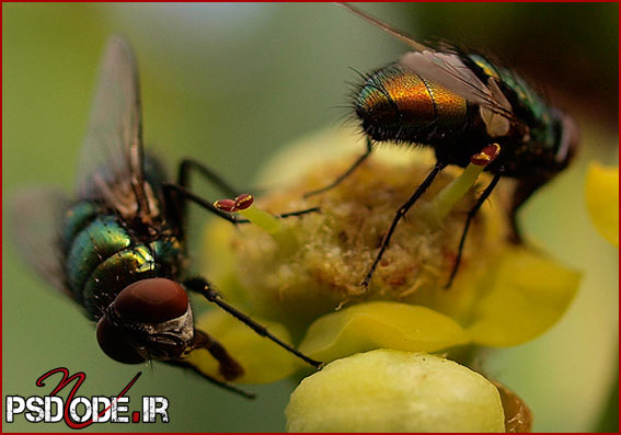 تکنیک-عکاسی www.psdmode.ir